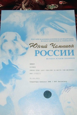 бивер Omega Star Lady Pom-Pon in white vom Weinberg, питомник Ирикидс, Пенза, диплом Юный Чемпион России