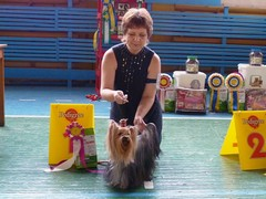 yorkshire terrier from Irikids SWEET BABY OF SHANGAI, CAC, CW, КЧФ, ЛС, ЛПП (BOB)